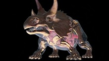 【狂野动物王国】三角龙头上的颈盾像推土机 任何猛兽都咬不破