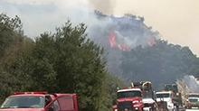 美国加州山火持续 野生老虎被运送至中转站