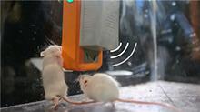你懂得不够20160114期:超声波灭鼠仪真的有效吗