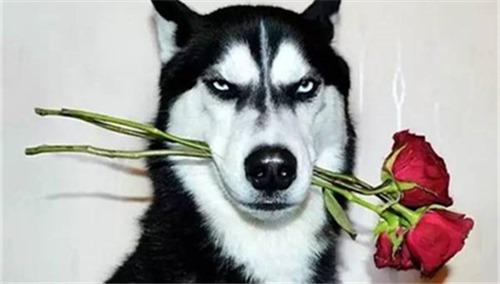 动物忧郁微信头像图片