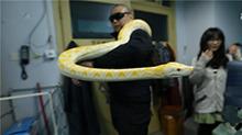 怎么好端端的蛇突然咬人了呢?