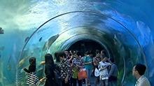 长沙海立方海洋公园首创情景式互动旅游