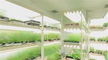 植物在太空中会长成什么样?