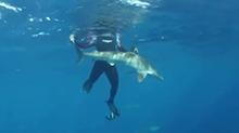 徒手抓大白鲨