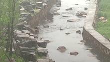 株洲清水塘又见新绿