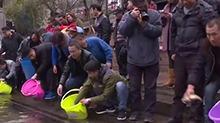 凤凰:四千斤鱼苗放流沱江河