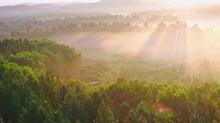 世界最大人工林场塞罕坝:除了震撼,还是震撼