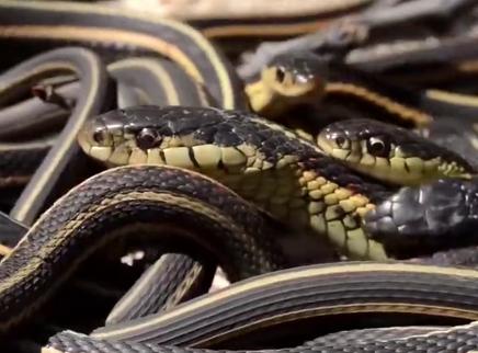 如何避免被蛇咬?