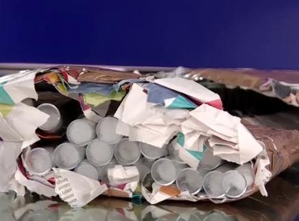 长沙海关首次截获活体南美切叶蚁