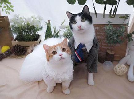 假装有猫系列!