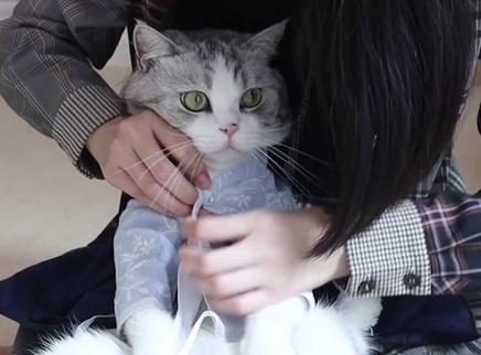 三猫给猫咪们试穿古装