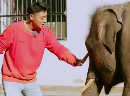 第40期:黄子韬收获大象撒娇